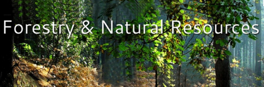 Forestry and Natural Resources Header: A forest