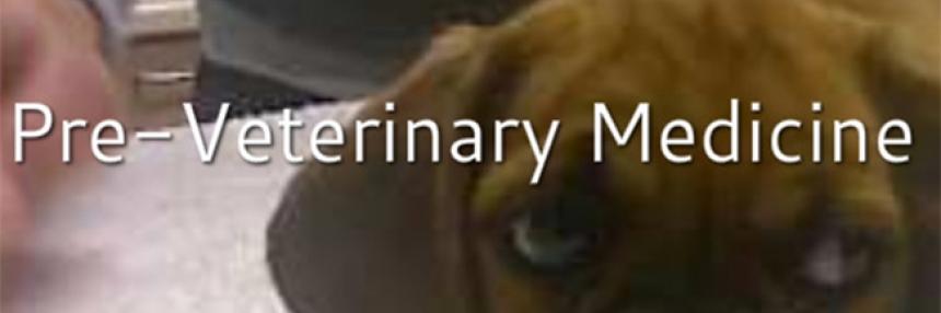 """Pre-veterinary Medicine Header: A dog in a vet office with words """"Pre-veterinary medicine"""""""