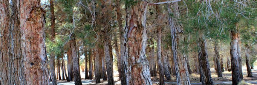 Trees!
